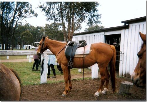 Australia Horse