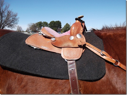 Saddle on Grumpy