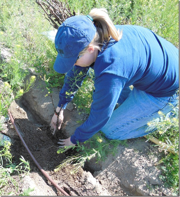 Amy packs dirt