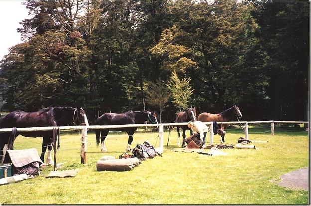 I saddle