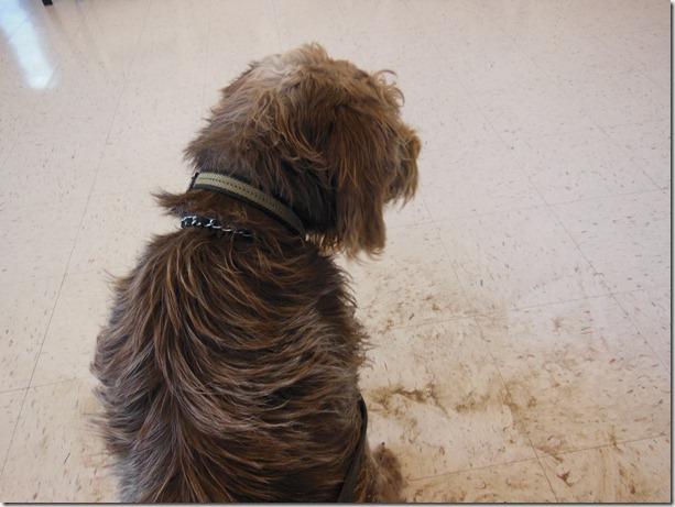 Winston in Dirt