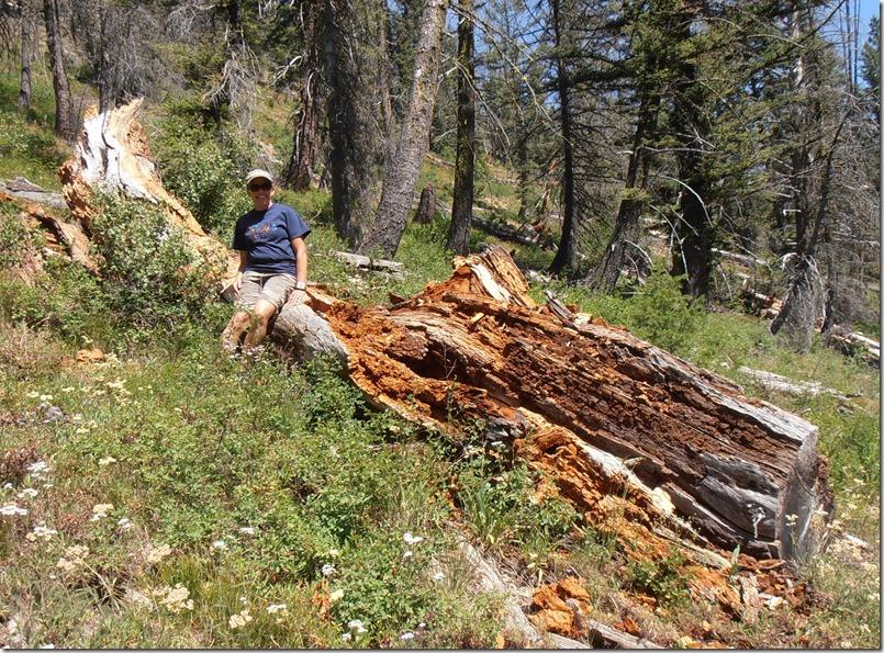 Mel Fallen Tree