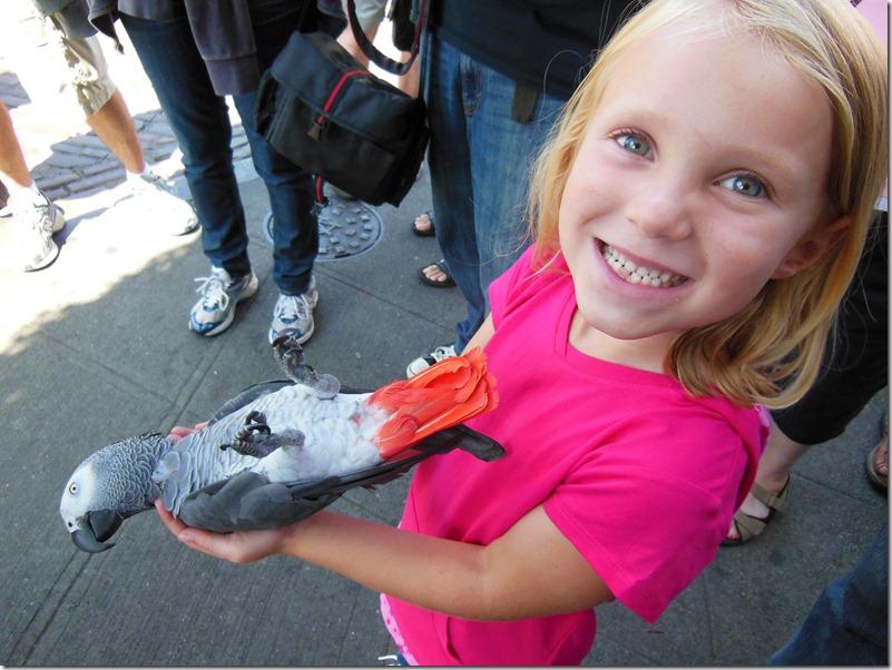 Seattle Parrot