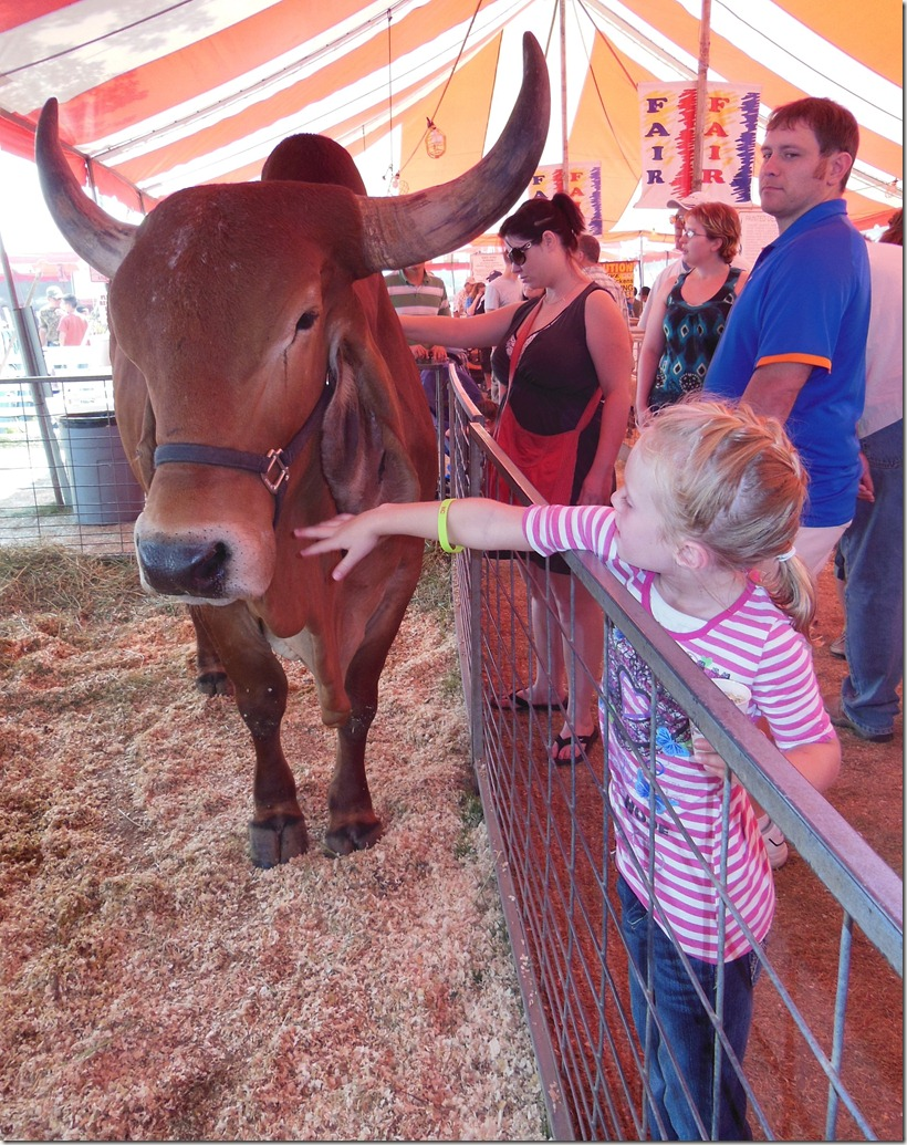 Fair Annabelle Big Steer