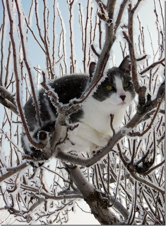 Frosty Cat in Tree
