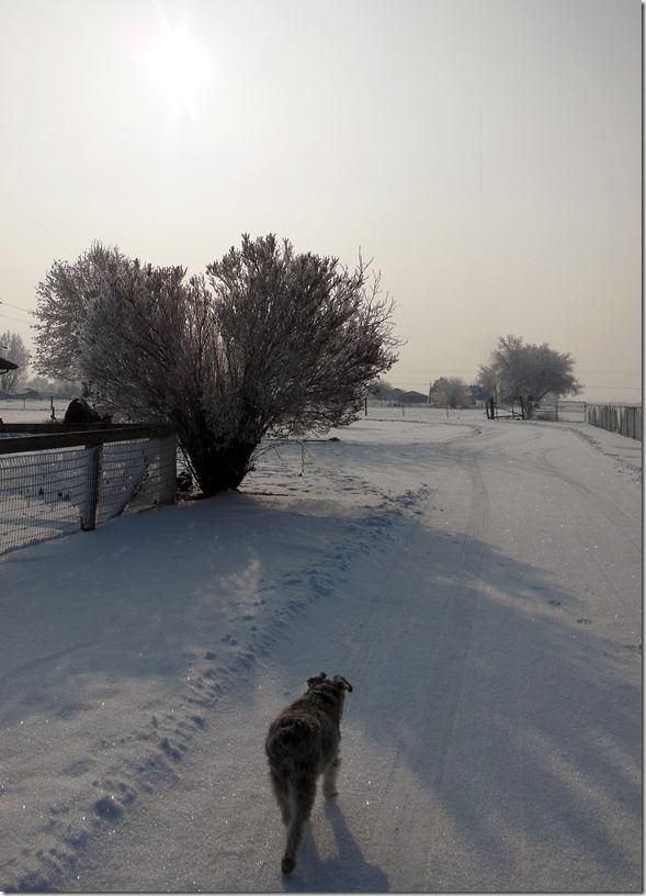 Maddie Snowy Road