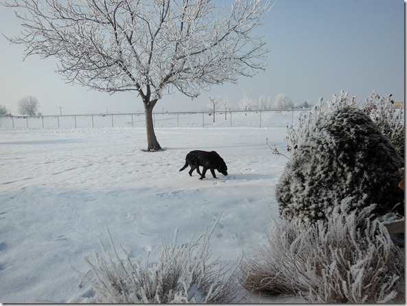 Old Dog in the Snow