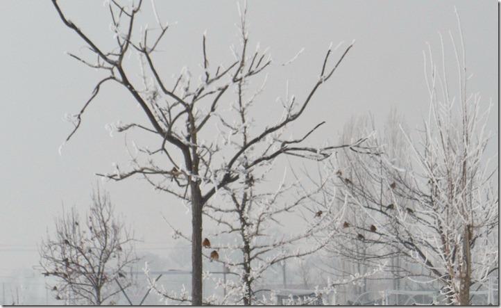 Trees of Birds