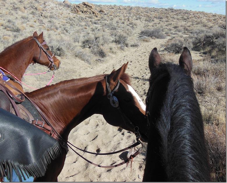 The Horses Confer