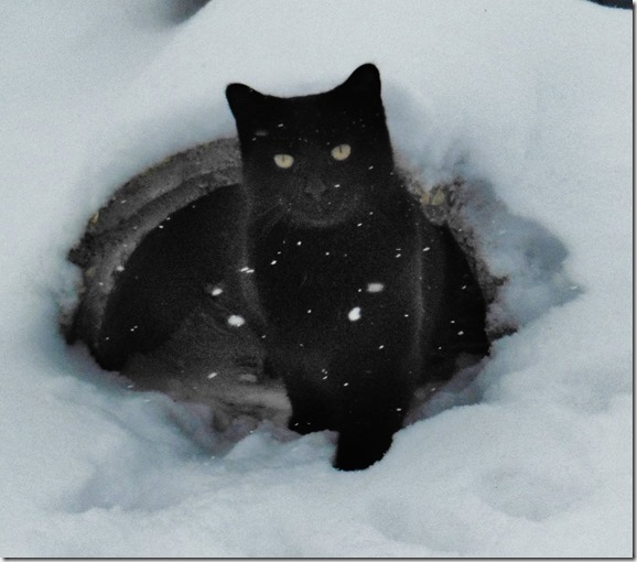 Xmas Blackie in Snow