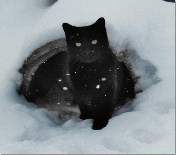 Xmas Blackie in Snow
