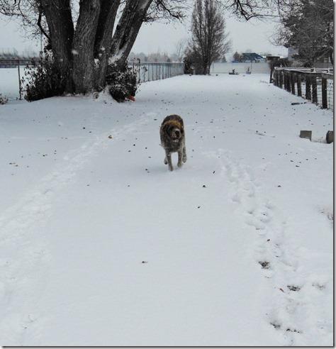 Xmas Snow Dog