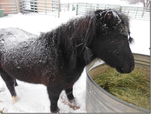 Xmas Snowy Reno