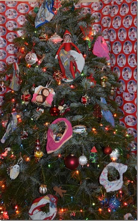 Underwear Tree Closeup
